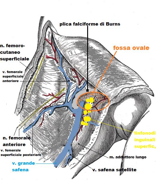 TRIANGOLO DI SCARPA EBOOK