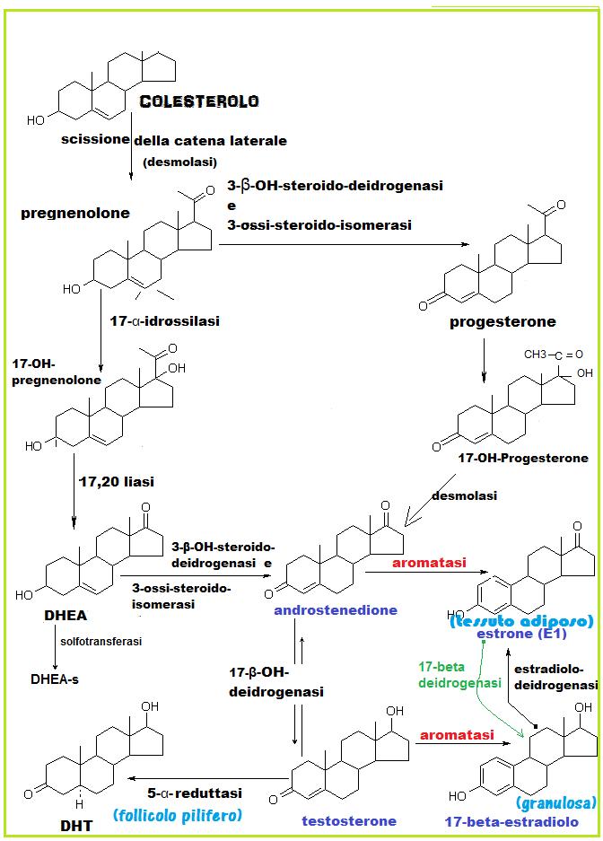 inibitori aromatasi steroidei