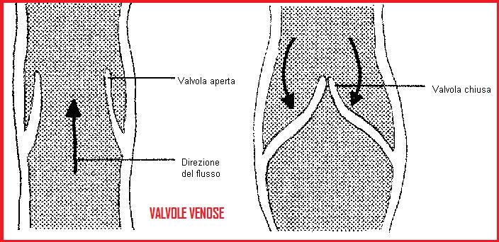 Malattia di circolazione del sangue delle estremità più basse