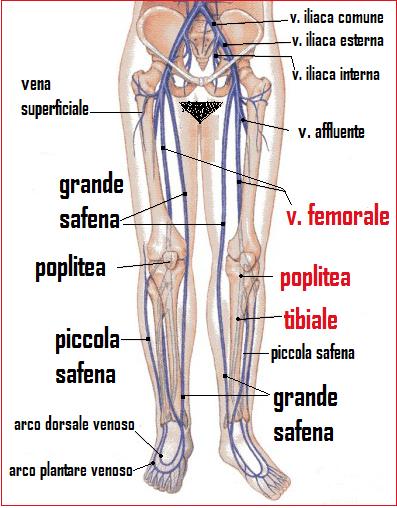 Rimozione di una vena su una durata di operazione di gamba