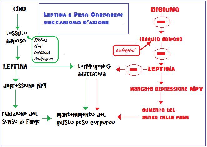 testosterone dose for female libido