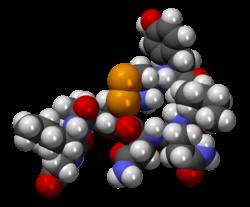 Hits: 17L'Ossitocina è un ormone peptidico sintetizzato dalle cellule neurosecretorie magnocellulari deinuclei paraventricolare e sovraottico dell'ipotalamo. L'ossitocina (OT) prodotta dalle cellule magnocellulari, racchiusa in vescicole, migra negli assoni delle stesse […]