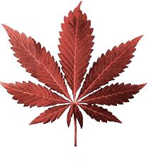 """Hits: 5La marijuana è la droga più usata al mondo. Proviene dalla pianta della canapa indiana, e la parte che contiene la """"droga"""" si trova principalmente nei fiori (comunemente chiamati"""" […]"""
