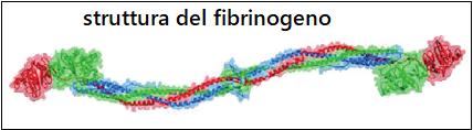 Hits: 82Il fibrinogeno, ofattore I della coagulazione, è un polipeptide plasmatico sintetizzato dalfegatocon lo scopo di favorire l'emostasi secondaria (1,2). STRUTTURA – Il fibrinogeno è formata da tre coppie di […]